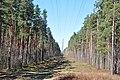 Elektropārvades līnija, Babītes pagasts, Babītes novads, Latvia - panoramio.jpg