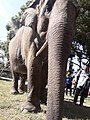 Elephant20171111 122137.jpg