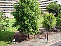 Elephant Road Park, London Borough of Southwark, SE17 (2800640619).jpg