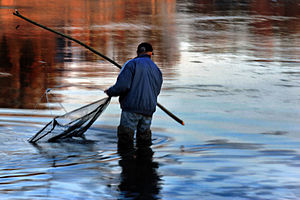 "Narva River - Fishing competition ""Narva Salmon 2014"""