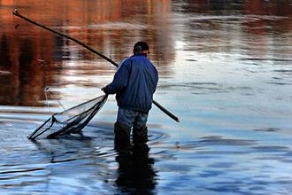 "Narva River - Fishing competition ""Narva Salmon 2014"""