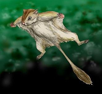 Eomyidae - Artist's impression of Eomys