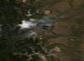Eruption of Copahue Volcano, Argentina-Chile, 01-01-2013.PNG