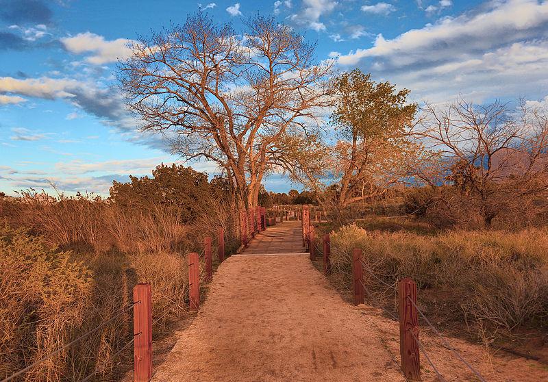 File:Evening Path (16613347166).jpg