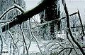FEMA - 1008 - Photograph by John Ferguson taken on 01-25-1998 in New York.jpg