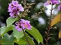 FLOWERS 4 (7169968145).jpg