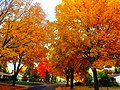 Fall Colors in Madison - panoramio (10).jpg