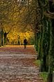 Fall colors (8148706602).jpg