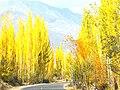 Fall in Hunza-basraa-5.jpg