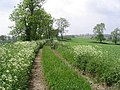 Farm track - geograph.org.uk - 461405.jpg