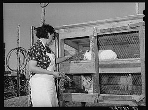 Cuniculture - Meat-type rabbits being raised as a supplementary food source during the Great Depression