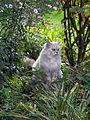 Fat Cat (5003912406).jpg