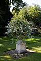 Feeringbury Manor lawn urn planter, Feering Essex England 3.jpg