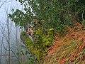 Felsenegg-Kante Tree, Grass and Fog.jpg