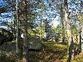 Felsgebilde Bärenstein im Naturpark Nordwald Bad Großpertholz 2008-10.jpg