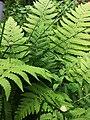 Fern Plant.jpg