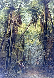 Fern woods (cyathea) on Cameroon Peak at 1800 meters.jpg