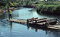 Ferry River. Man & bamboo raft. West of Kingston (24442453098).jpg