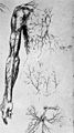 "Fig. 55 ""Leonardo da Vinci the anatomist"" from McMurrich Wellcome M0010885.jpg"