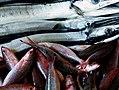 Fish market Batac City.Ilocos Norte. (15739181034).jpg