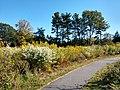 Fisher Hill Reservoir Park, Inner Trail.jpg