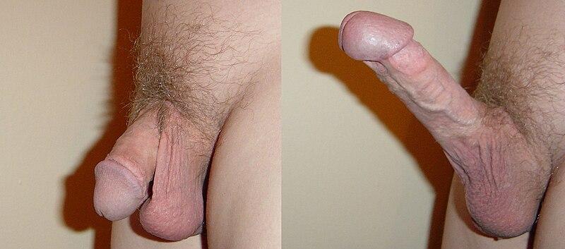 Фото мужских половых членов