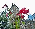 Flickr - Duncan~ - St Botolph's flora.jpg