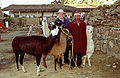 Flickr - archer10 (Dennis) - Bolivia-89.jpg