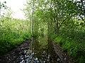 Flooded path in the Teufelsbruch swamp 9.jpg