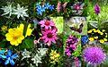 Flore de Bonneval-sur-Arc.jpg