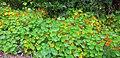 Flores no Parque.jpg