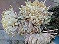 Flower.15.jpg