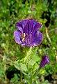 Flower (27048728455).jpg