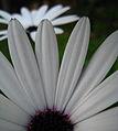 Flower (356385411).jpg