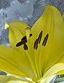 Flower (5966260407).jpg