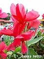 Flower - panoramio (18).jpg