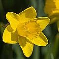 Flower 7886.jpg