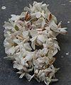 Flower MULLAI THALAVAM.jpg