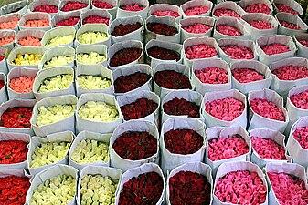 Flower bundles.jpg