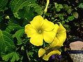 Flowers 144528.jpg
