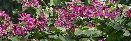 Flowers I IMG 2101.jpg