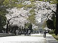 Flowers in Hiroshima.jpg