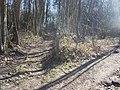 Footpath junction in Valley Wood - geograph.org.uk - 1196249.jpg