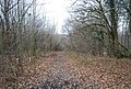 Footpath through the woods South of Sheepstreet Lane - geograph.org.uk - 1106053.jpg