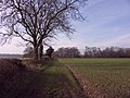 Footpath towards Penley Wood - geograph.org.uk - 111238.jpg