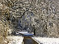 Forest Walk - panoramio (18).jpg