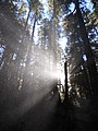 Forest sol duc valley scenic c bubar march 04-2015 (17126313608).jpg