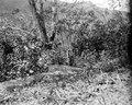 Från gammal boplats vid Rio Tuiche. Sydamerika, Rio Tuiche. Bolivia - SMVK - 002436.tif