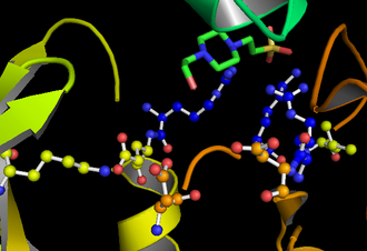 GSK-3 - The active site of GSK-3. The three residues in blue bind the priming phosphate on the substrate, as demonstrated by the ligand. Residues D181, D200, K85, and E97.