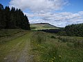 Gap in the forest - geograph.org.uk - 526011.jpg